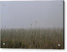 The Onion Field Acrylic Print