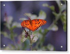 The Orange Wings Acrylic Print