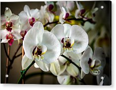 The Orchid Sisters And Backup Singers Acrylic Print by John Haldane