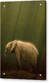 The Orphin Acrylic Print by Aaron Blaise