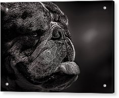The Other Dog Next Door Acrylic Print by Bob Orsillo