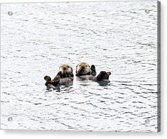 The Otters Say Hello Acrylic Print by Saya Studios