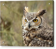 Acrylic Print featuring the photograph The Owl by Lucinda Walter
