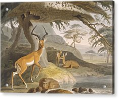 The Pallah, 1804-05 Acrylic Print