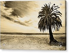 The Palm Swayed As The Storm On The Ocean Blew In Acrylic Print by Artist and Photographer Laura Wrede