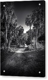 The Palm Trail B/w Acrylic Print by Marvin Spates