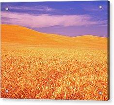 The Palouse Steptoe Butte Acrylic Print