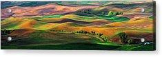 The Palouse Acrylic Print by Hua Zhu