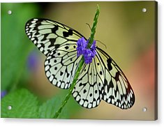 The Paper Kite Butterly Acrylic Print
