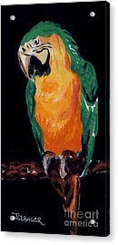 The Parrot Acrylic Print by Joyce Gebauer