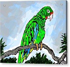 The Parrot Acrylic Print