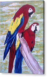 The Parrots Acrylic Print by Kevin Chimasia