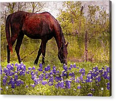 The Pasture Acrylic Print by Kathy Churchman