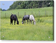 The Pasture Acrylic Print by Susan Leggett