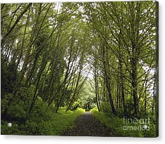 The Path Ahead Acrylic Print by Susan Parish