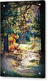 The Path Acrylic Print by Dawdy Imagery
