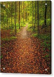 The Path Acrylic Print by Maciej Markiewicz
