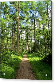 The Path Of The Righteous Man Acrylic Print