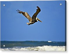 Acrylic Print featuring the photograph The Pelican And The Sea by DigiArt Diaries by Vicky B Fuller
