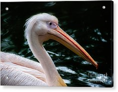 The Pelican Acrylic Print by Hannes Cmarits
