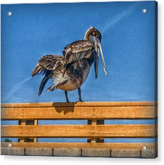 Acrylic Print featuring the photograph The Pelican by Hanny Heim
