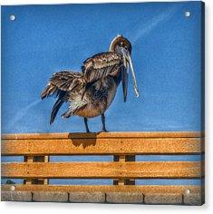 The Pelican Acrylic Print by Hanny Heim