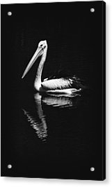 Acrylic Print featuring the photograph The Pelican by Zoe Ferrie