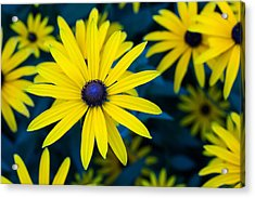 The Perennial Petal Acrylic Print