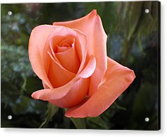 The Perfect Coral Rose Acrylic Print by Kurt Van Wagner