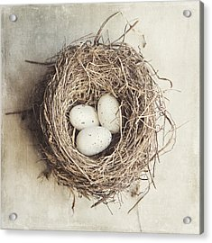 The Perfect Nest Acrylic Print by Lisa Russo