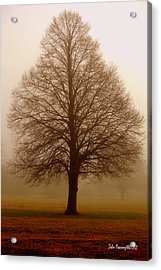 The Perfect Tree Acrylic Print
