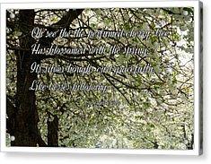 The Perfumed Cherry Tree 1 Acrylic Print
