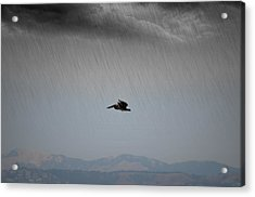 The Persevering Pelican Acrylic Print
