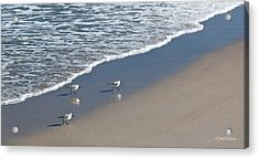 The Pied Sandpiper Acrylic Print by Michelle Wiarda