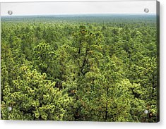 The Pinelands Acrylic Print by Dawn J Benko