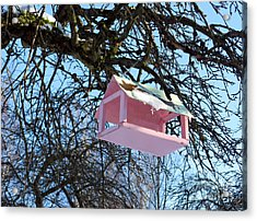 The Pink Bird Feeder Acrylic Print by Ausra Huntington nee Paulauskaite