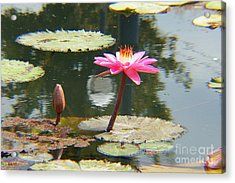 The Pink Water Lily With Lily Pads - One Acrylic Print by J Jaiam