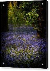 Acrylic Print featuring the photograph The Pixie's Bluebell Patch by Chris Lord