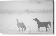 The Play Of Horses Acrylic Print