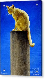 The Pole Cat... Acrylic Print by Will Bullas