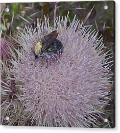Acrylic Print featuring the photograph The Pollen Count Is High Today by John Glass