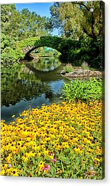 The Pond Acrylic Print by Karol Livote