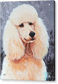 Attentive Poodle Acrylic Print