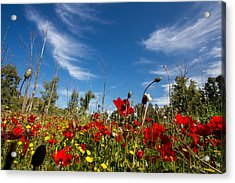 The Poppies Field Acrylic Print