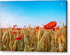 Summer Poetry Acrylic Print