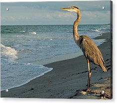 Acrylic Print featuring the photograph The Poser by Paul Noble