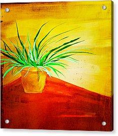 The Pot Plant Acrylic Print