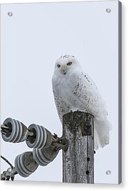 The Power Of The Owl Acrylic Print