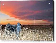 The Prairie Acrylic Print by Minnie Lippiatt