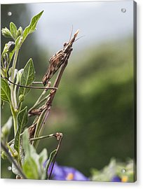 The Praying From South Of France Acrylic Print by Terry Cosgrave